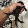 子猫4匹  サムネイル6