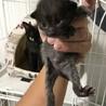 子猫4匹  サムネイル7
