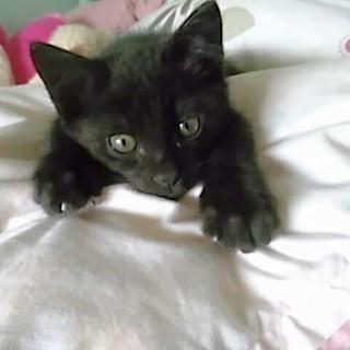 黒ネコの男の子です