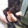 ハンデのある子猫★ゆうこ★おっとり サムネイル2