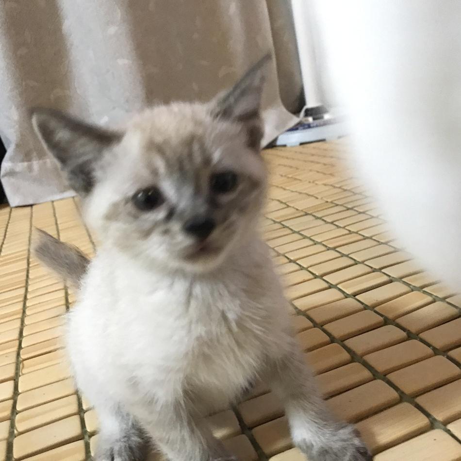 太郎のカバー写真