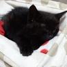 小さな黒猫ちゃん