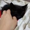小さな黒猫ちゃん サムネイル2