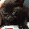 小さな黒猫ちゃん サムネイル3