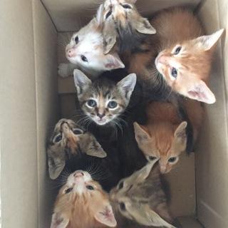 *愛らしい子猫8頭*