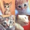 *愛らしい子猫8頭* サムネイル4