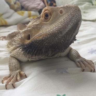 トイレの後お風呂入れてあげると顎黒くして頭を振るテンション高い茶太郎笑