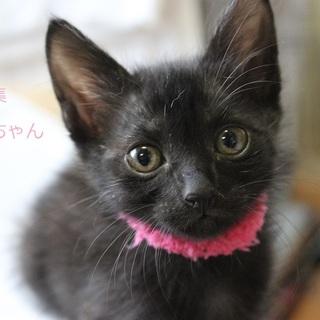 あまあま♡黒仔猫まりんちゃん里親募集