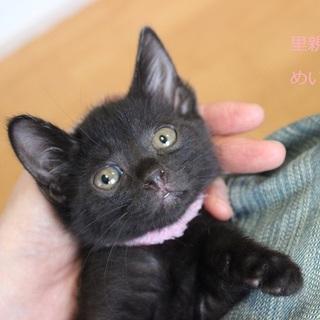 あまあま♡黒仔猫めいちゃん里親募集