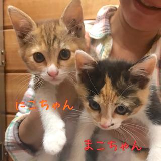 *三毛猫姉妹の『にこちゃん』『まこちゃん』*