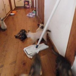 里親さん、募集中 6匹子猫 その3