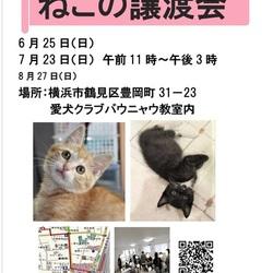 横浜  つるみ・猫のカギしっぽ譲渡会(鶴見駅歩5分室内)