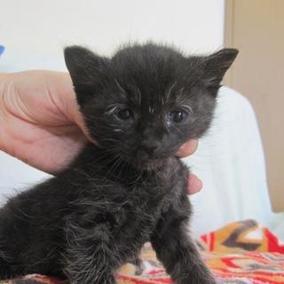 おじいちゃん顔の黒猫さんでー君 離乳中