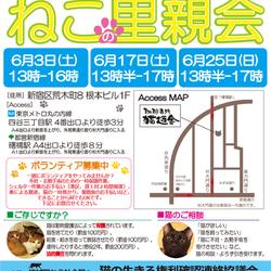 6月25日(日)地域猫から社会猫へ 四谷猫廼舎(ねこのや)里親会(ボランティアも募集中)