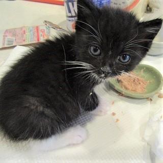 モコモコの可愛い子猫 タロ君