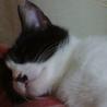 猫さん大好き♪ねね サムネイル6