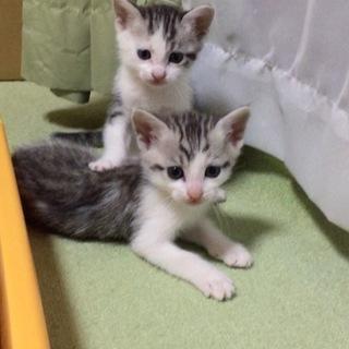 4月29日産まれの子猫ちゃんの里親様募集!