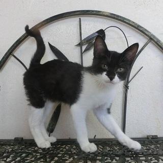 美雨(みう)生後4か月 猫の方舟里親会に参加します