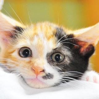 完全無欠の三毛猫ちゃん
