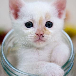 超美形!白三毛ちゃん