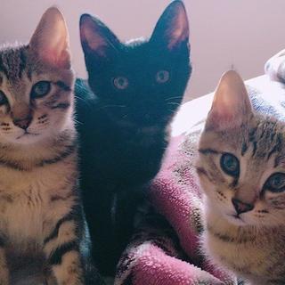 最後3ヶ月子猫の里親さん募集