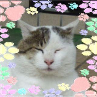 見た目に似合わず、人が大好きなドスコイ猫オヤビン