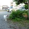 見た目に似合わず、人が大好きなドスコイ猫オヤビン サムネイル4