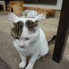 見た目に似合わず、人が大好きなドスコイ猫オヤビン サムネイル5