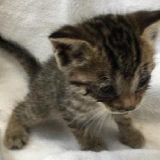 可愛い子猫が収容されています!期限6月28日迄!