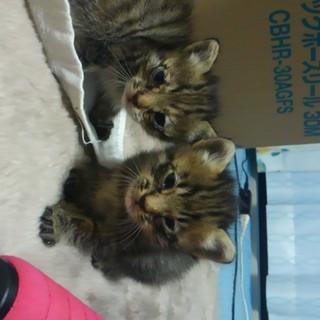 カラスに狙われてた子猫を二匹保護しました。