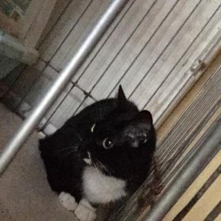 白黒猫ちゃんの里親さん募集