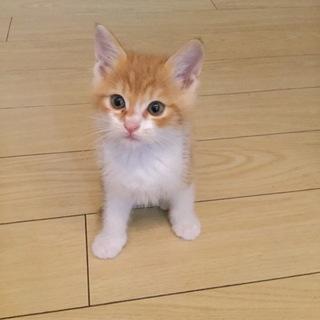 【一時募集停止】子猫4兄弟の里親様募集☺︎