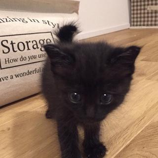 かわいい黒猫ちゃんです!
