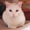 仲良し白猫兄弟