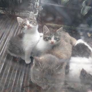 可愛い子猫3匹もらって下さい