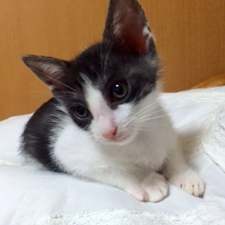 綺麗な白黒のリボンくん…2ヶ月