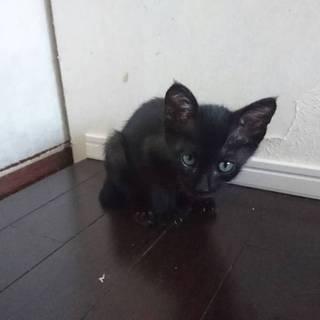 黒猫2ヶ月