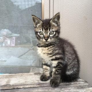 3ヶ月位の子猫