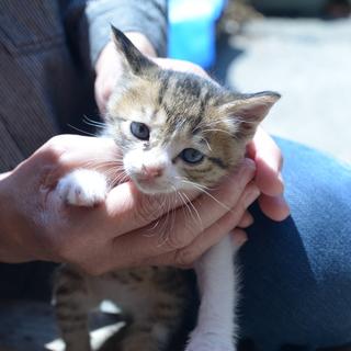 野良猫の赤ちゃんの里親探してます。