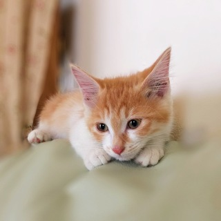 甘えっこな女の子 先住猫OK