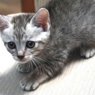 5月12日生まれの仔猫の里親募集