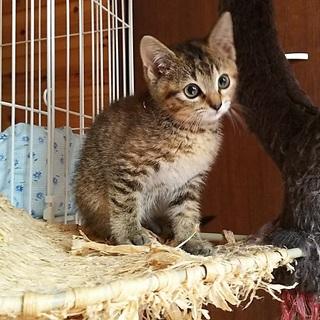 仲良し姉妹猫 生後7週間~8週間