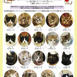 Bootymarket × [sakuraneko] 猫の譲渡会 ミニフリマもやります!