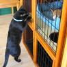 ワイルドで遊び好きな黒猫カイ君(=^・・^=) サムネイル2