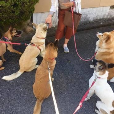 Edとお散歩仲間、みんな元野犬、保護犬。賢いよぉ!