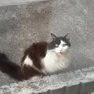 猫の里親さん探してます!!