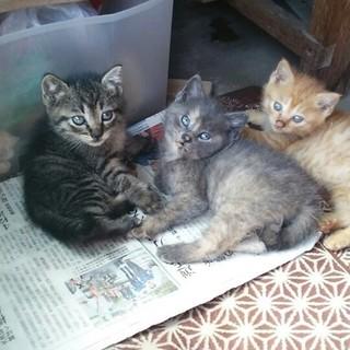 1ヶ月半くらいの子猫達です。