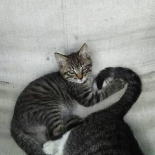 生後2ヶ月の子猫(できれば母猫も)