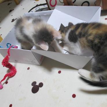 箱大好き!