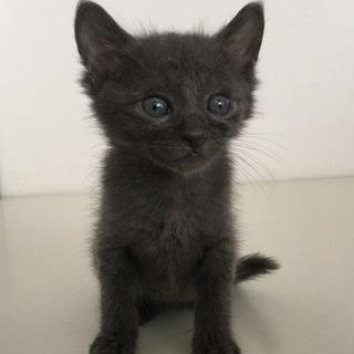 グレー子猫ちゃん